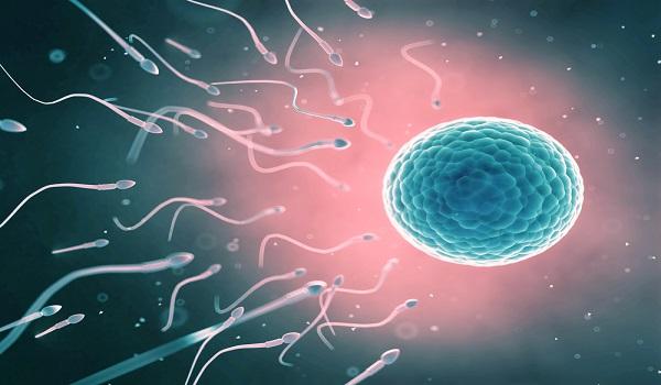 homens com menos espermatozoides